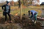 Z výsadby stromů v Lešanech