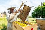 Firemní včelaření neratovické Spolany.