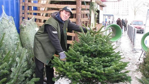 Nejoblíbenějším vánočním stromkem je letos jedlička