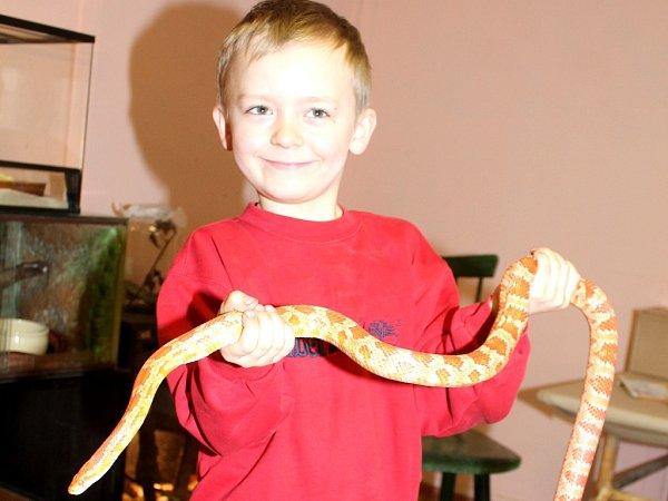 Šestiletý Jakub Kocábek sjedním ze svých hadích mazlíčků, užovkou červenou.