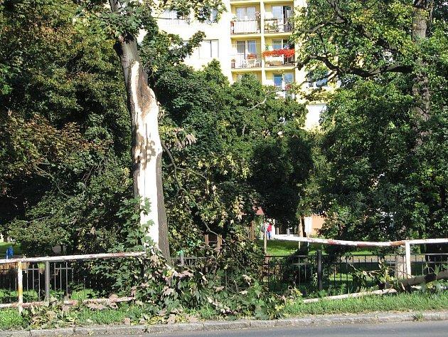 Spadené stromy po větrné smršti v Kralupech nad Vltavou.