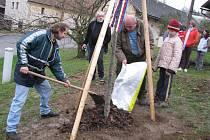 Nová lípa, kterou v úterý 17. listopadu zasadili ve Lhotce připomíná smrt Jana Opletala a dvacáté výročí pádu komunistického režimu