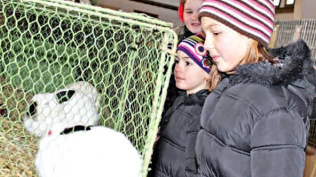 Kluci a holky si výstavu kralupských chovatelů nenechali ujít. Některým budoucím chovatelům se dokonce podařilo přesvědčit rodiče, aby jim nějaké zvířátko koupili domů.
