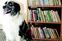 Knihovnička na neratovickém nádraží zaujala i psa Budyho, který právě odjížděl do Prahy.