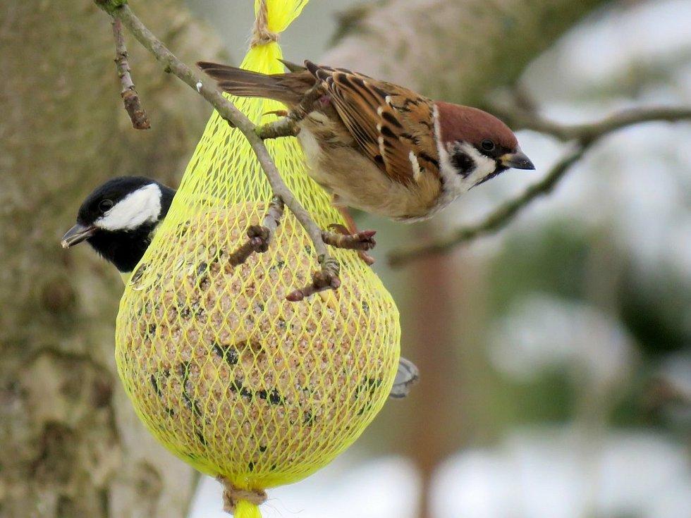 Ptáci na lojové kouli.