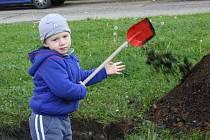 Výsadba Stromů pro děti, Neratovice.