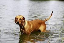 Ochlazení ve vodě je pro zvířata velmi příjemné, ale majitelé by měli věnovat pozornost čistotě vody.
