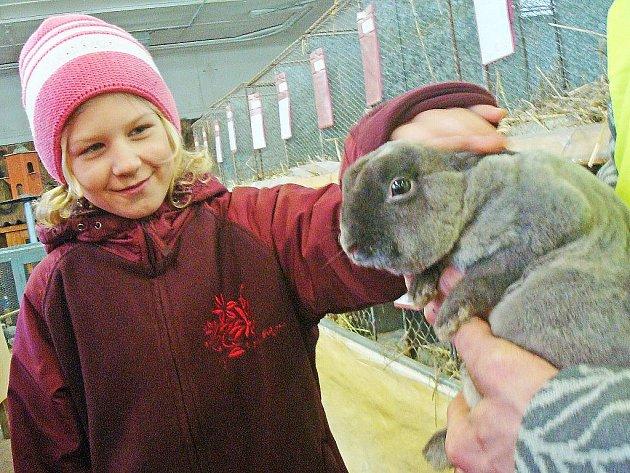 Výstava drobného zvířectva v Kralupech nad Vltavou.