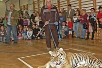 Boba, mládě tygra ussurijského, přivedl do skoro plné školní tělocvičny Jaroslav Kána z Veletic na Žatecku.