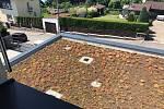 Zelené střechy mají například na škole v Mnichovicích na Praze-východ.
