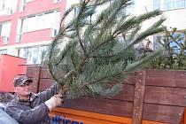Mělnické Technické služby sváží vyhozené vánoční stromky