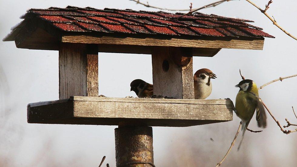 Ptáci u krmítka.