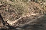 Orkán Sabine zanechal své stopy také na Kokořínsku. Polámané stromy u silnice jsou toho důkazem. Naštěstí zde prozatím nedošlo k žádné dopravní nehodě.