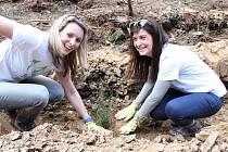 Dobrovolníci na Mšensku sázeli tisíce stromků.