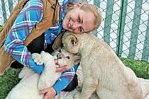 Už čtyři měsíce dělá Jiřina Horká ze známého cirkusového rodu Berousků mámu dvěma koťatům lva pustinného.