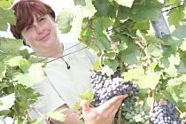 Na vinicích školního statku zrají i modré odrůdy révy, z těch ale burčák nebude.