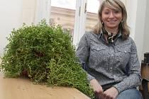 Jednou ze zázračných rostlin, které Markéta Albertová objevila u spolužáka ve skleníku, je bakopa drobnolistá.