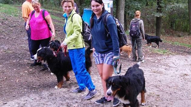 Na Říp si každý rok vyšlápne několik desítek psů, většinou bernských salašnických.