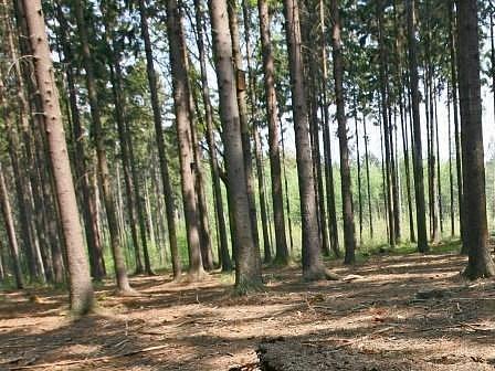 Lesy by měly být přístupné širokému spektru turistů.