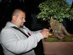 V sobotu se v Mělníku konala výstava bonsají.