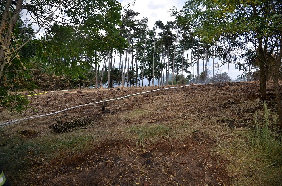 Páteční lesní požár u Nelahozevsi.