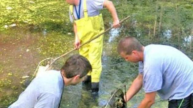 LIKVIDACE. Uhynulé ryby museli z hladiny rybníka sesbírat profesionální hasiči.