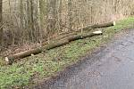 Pondělní vichřice za sebou zanechala popadané stromy také na silnici nedaleko Mšena směrem na Vrátno.