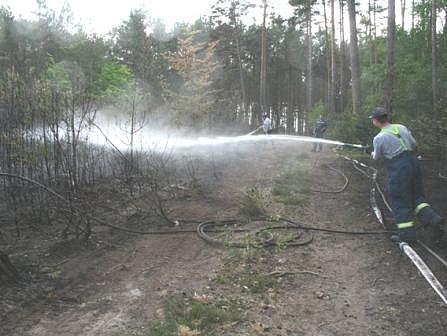 Ze zásahu hasičů při lesním požáru na Liběchovsku.