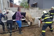 Hasiči pomáhali koni, který se zasekl nohou za hrazení jízdárny.