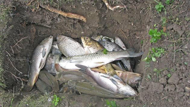 Mrtvé ryby.