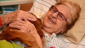 Canisterapie ve valašskomeziříčské nemocnici