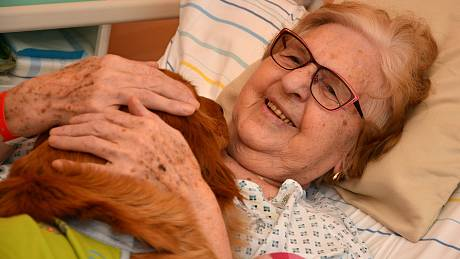 Do valašskomeziříčské nemocnice Agel se po více než roce vrátili psi, kteří poskytují pacientům důležitou canisterapii. Květen 2021, dvouletá fenka Bella.