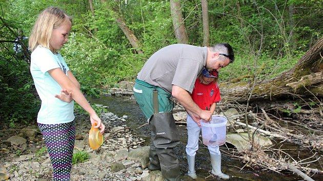 Rybáři vysadí do vsetínských potoků 375 000 plůdků pstruha obecného