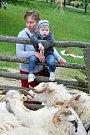 Slavnostní výhon ovcí na salaš s ukázkami tradičního života na dědině byl k vidění v sobotu 20. května ve Valašské dědině Valašského muzea v přírodě v Rožnově pod Radhoštěm. Stovky návštěvníků zaujaly činnosti spjaté s chovem ovcí a další bohatý program.