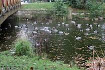 Rybníček a přilehlé okolí okupují desítky opeřenců.