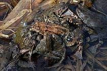 U rybníka Neratov už můžete potkat i žáby.