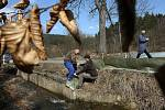 Speciální ochrannou fólii instalovali ve čtvrtek u rybníka Neratov mezi Valašskou Polankou a Pozděchovem ochránci přírody z Valašského Meziříčí.