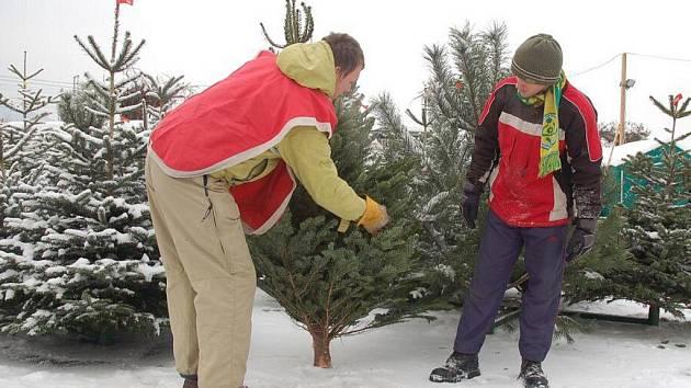 Ve Valašském Meziříčí už prodávají vánoční stromky.