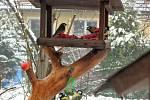Tříkrálový oběd ptáčků v krmítku.