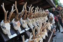 VÝSTAVA. Vloni obdivovali návštěvníci lovecké trofeje. Letos si prohlédnou expozici jeleních shozů.