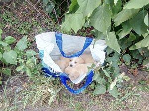 Tři asi šestitýdenní štěňata někdo odložil v igelitové nákupní tašce na ulici V Zahrádkách ve vsetínské místní části Rybníky. V úterý dopoledne (17. července 2018) je našel strážník městské policie. Dva pejsci a jedna fenka jsou  nyní ve vsetínském zvířec
