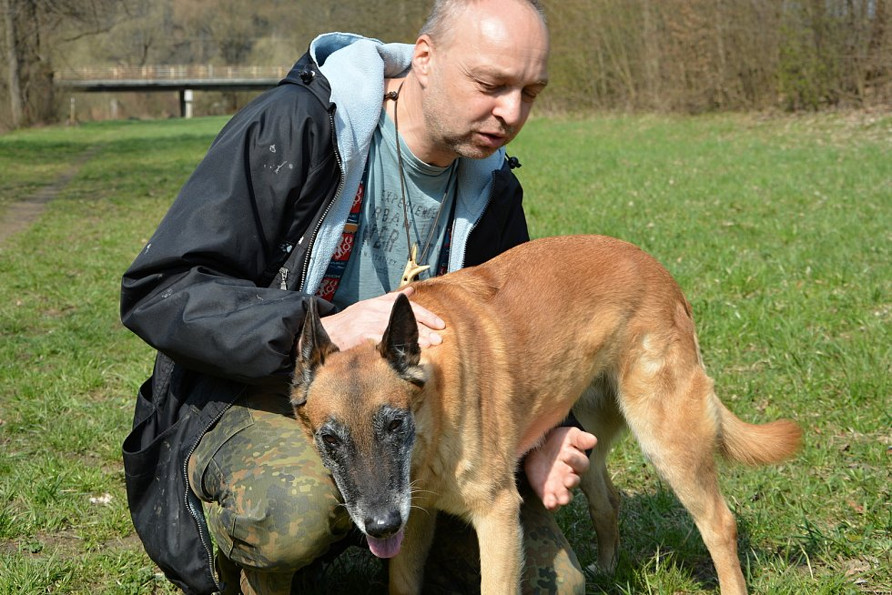 Psi nemohli v době pandemie na cvičáky. Chybí jim socializace. Na snímku výcvikář Pavel Riedl (vlevo) se čtrnáctiletou fenou belgického ovčáka Cho Chang.