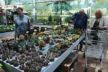 V Zahradním centru ve Valašském Meziříčí vystavují stovky kaktusů a dalších sukulentů. Výstava trvá do 22. září 2019.