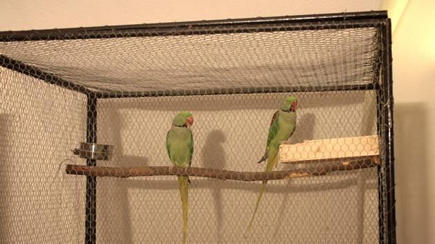 Okolo dvou set okrasných ptáků bylo o víkendu vystaveno ve vsetínském zámku.