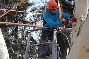 Arboristé zpevňují korunu asi sto třicet let starého platanu javorolistého v meziříčském parku Botanika; úterý 2. dubna 2019