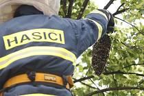 Lidé většinou při objevení roje přivolávají hasiče, ti ale zasahují, jen když hmyz ohrožuje okolí.