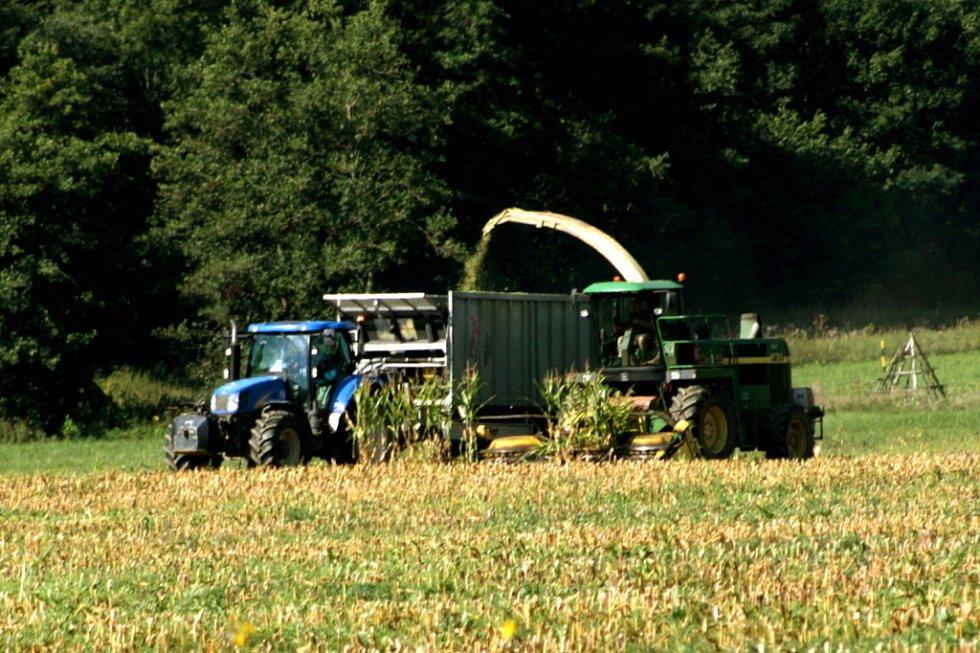 Sklízení kukuřice.
