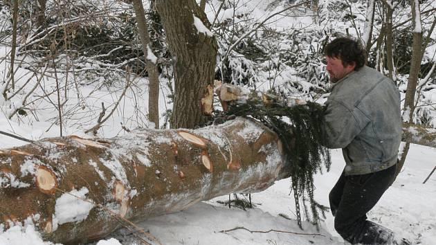 Lesní dělníci likvidují následky vichřice, která pustošila stromy na Soláni.