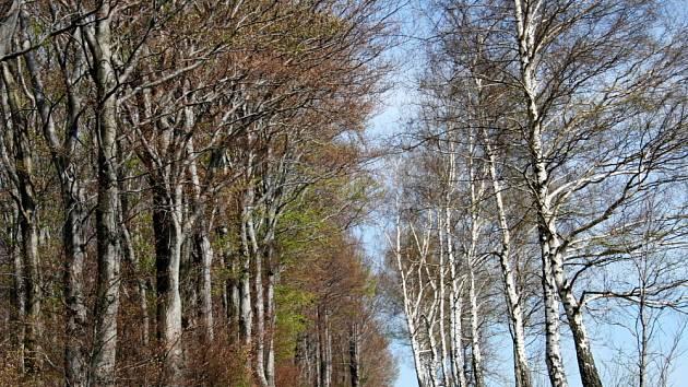 Ochránci přírody protestují proti kácení alejí