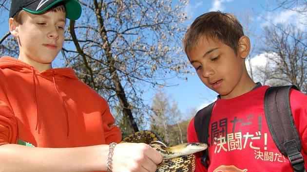 Vít Jelínek z chovatelského kroužku předváděl zájemcům nejedovaté hady.